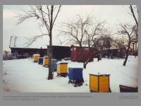 Gerardo Brazausko sodyba. Iš dešinės pirmas, trečias ir septintas – išlikę Kazio Brazausko aviliai. Purvėnai, Švenčionių rajonas. 2012 m.