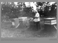 Kazys Brazauskas (1906-1997) prie savo sukonstruotų bičių avilių. Antrojo iš kairės avilio gamybai panaudoti šiaudai.  Žalio Ostempo kaimas, Kaišiadoriu rajonas. Apie 1954 m.