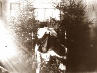 3. Šarvojimo patalpų dekoravimas toteminiais augalais. Eglės simbolizavo  gyvybės nenutrūkstamumą. Kaišiadorys. XX a.4 deš.